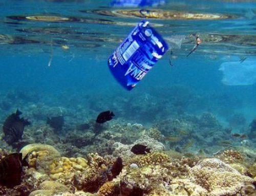 3 Iniciativas para la Defensa Medioambiental